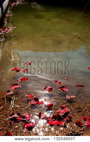 A group of rose petals floats to shore after scattering them with the ashes of a loved one.