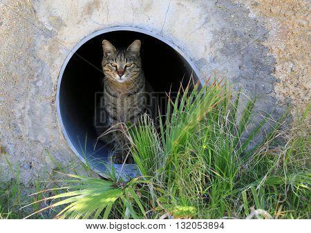 Serious cat in nature