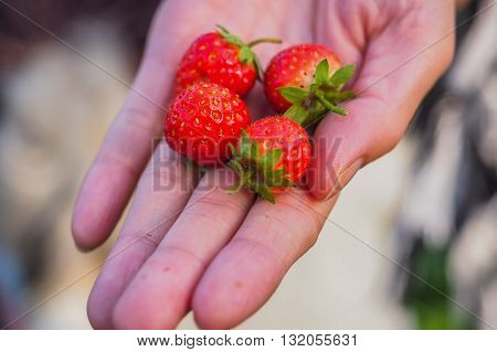 Sweet to sour Strawberry is the fruit trade .