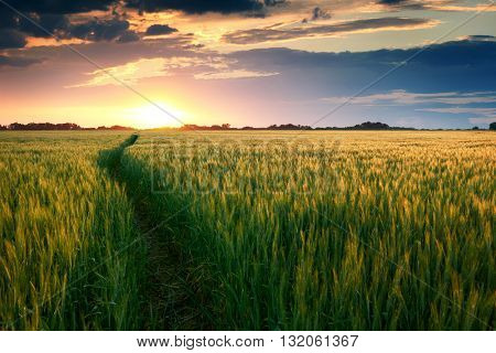 beautiful sunset in field with pathway to sun, summer landscape, bright colorful sky and clouds as background, green wheat