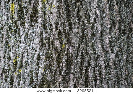 Detail of wooden bark texture for background