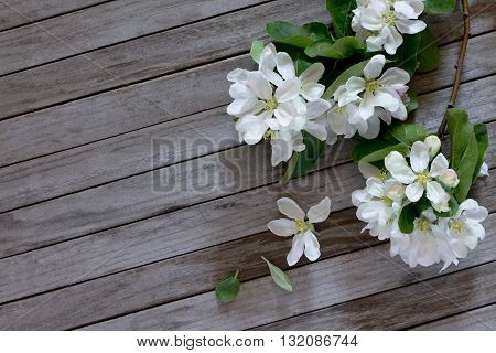 Apple Tree Flowers On A Wooden Table, Selective Focus. Space For Your Text.