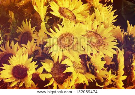 bouquet of sunflowers closeup with a filter or effect