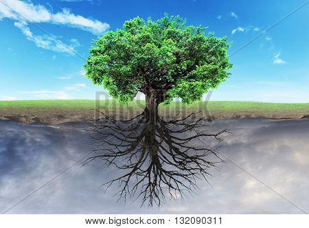 Concept of doubleness. Two worlds with horizon separated in center. Life tree at the half world dead tree at another half. Religion.