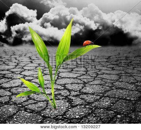 Green plant growing trough dead soil