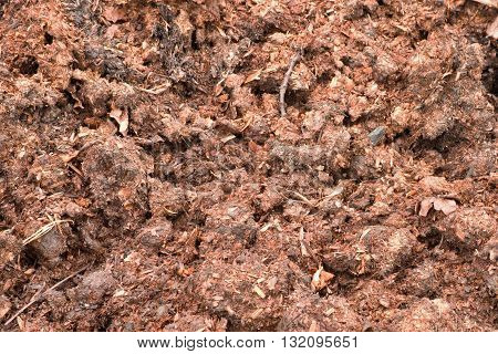 Natural fertilizer from cow dung, natural manure