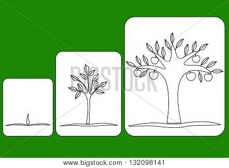 three stages of tree growth from seed to fruiting tree