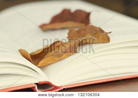 Close up of an open book with autumn leaves. Toned with a retro vintage filter.