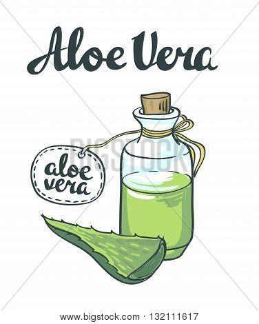 Natural Vector Aloe vera illustration isolated objects