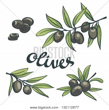 Set of black olives. Vector isolated objects.