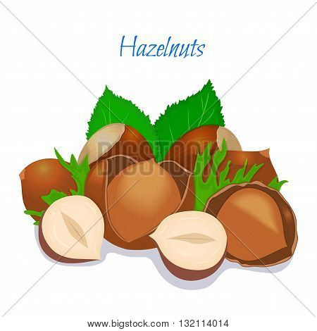 Vector illustration of a handful of filbert. Hazelnut in a shell, shelled half, crushed walnut leaves. Appetizing, delicious cobnut image element for design packing food products, healthy eating