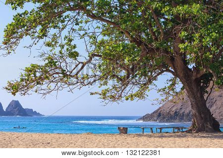 Tranquil scene on best desert beach with white sand on ocean bay Mawun in tropical island Lombok. Wood benches with no people under shady big tree in lost paradise. Travel and vacations in Indonesia.