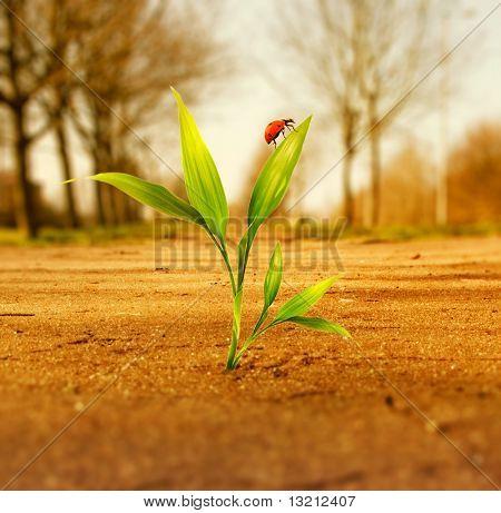 Fresh green grass growing through dry soil