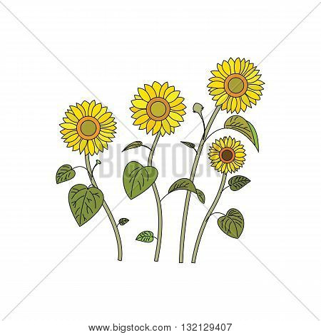 Beautiful four sunflowers vector illustration isolated on white background.