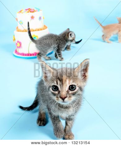 Four kittens and a birthday cake