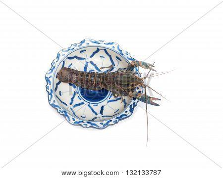 Australian blue crayfish Cherax quadricarinatus in plate isolated On a white background