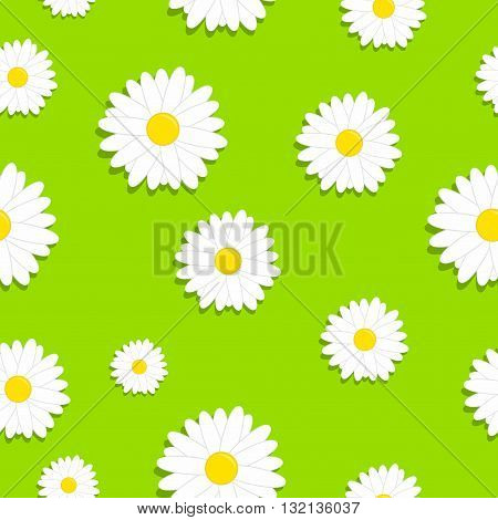 Cute seamless pattern with white chamomiles flowers on a grass or green background.