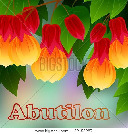 Red Vein Chinese Lantern Abutilon pictum with flowers. Misiones Rainforest, Argentina, South America. Vector illustration