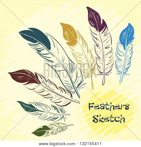 Set of beautiful colored feathers. Sketch feathers. Vector illustration