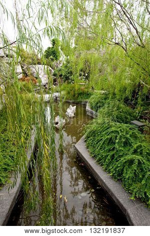 Beautiful Chinese style garden with mature green bamboo