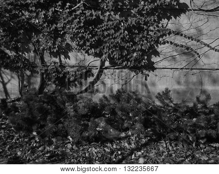 Black and White Crawling Overgrowth in Autumn