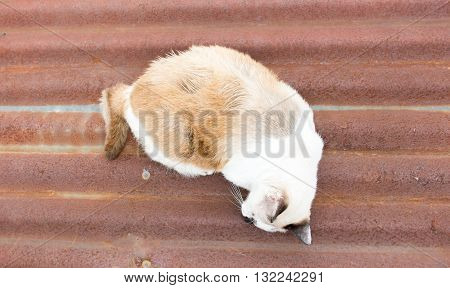 Street Cat Sleeping On Rustic Galvanised Iron Roof Near The Canal