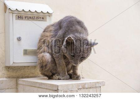Gray Cat Sitting Near Mailbox