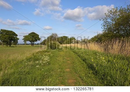English Towpath In May