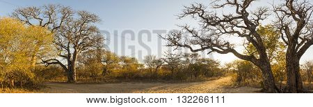 African Landscape Panorama