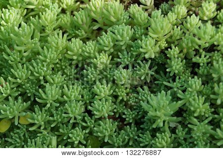 Groundcover creeping, low-growing plants, usually perennial and beautiful