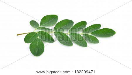 Moringa leaves isolated 0n white background food