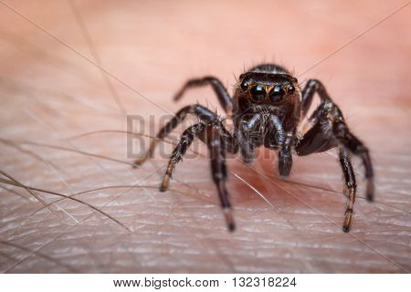 Super macro close up jumping spider on human skin