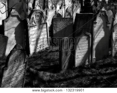 old jewish cemetery in town Mikulov rabbi hill black and white spring photo