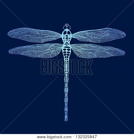 Dragonfly. Vector dragonfly. Hand drawn vector damselfly.