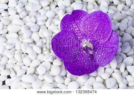 Beautiful orchids Placed stones on white background.