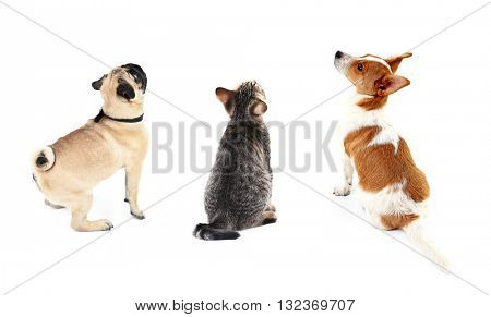 Cat and dogs together, view from the back, isolated on white