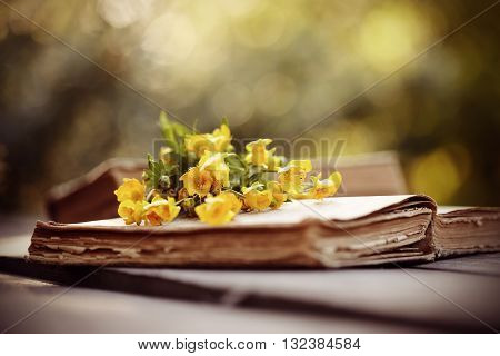 Old open book and small bouquet of buttercups.