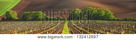 France vineyard in the evening, summer time