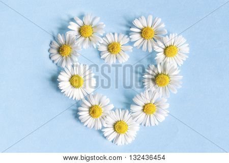Frame of flowers daisies in the shape of a heart on a blue background