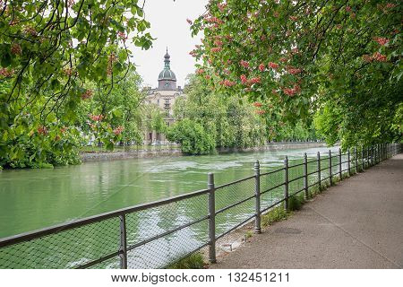 Riverside Of Isar River Munich, With Blooming Red Chestnut Trees
