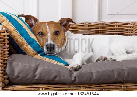 Cozy  Dog In Bed
