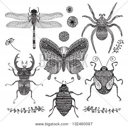 Collection of Six Black Hand Drawn Doodle Insects. Decorative Dragonfly, Butterfly, Spider, Stag-beetle, Bugs with Hand Drawn Patterns, Vector Illustartion for Adult Coloring Books or Tattoos.