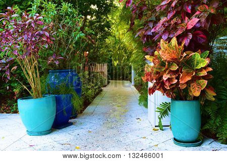 Colorful tropical potted plants taken in a residential garden