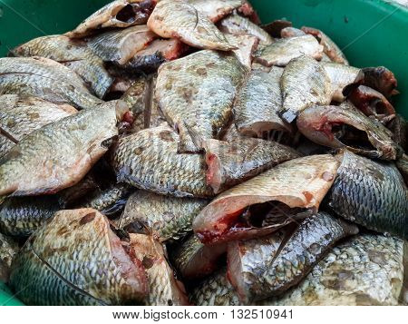 close up Oreochromis niloticus fish for cooking
