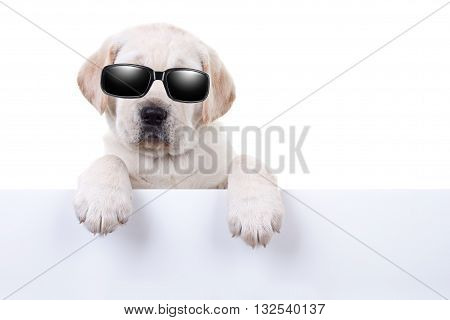 Cool summer holiday dog in sunglasses holding sign