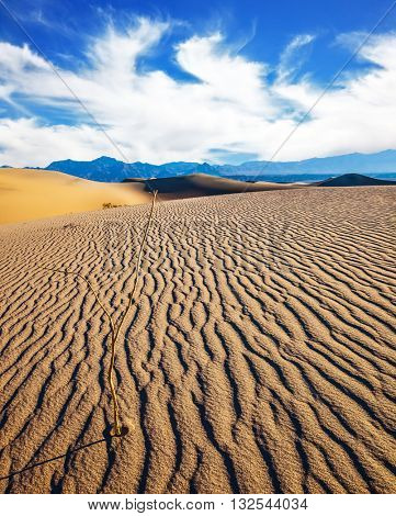 Mesquite Flat Sand Dunes. Early morning  in a picturesque part of Death Valley, USA. Small ripples on sand dunes