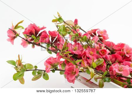 Japanese Rose Flowers In A Box