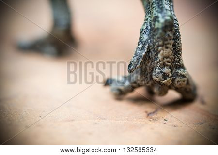 feet of a green tyrannosaurus on rock