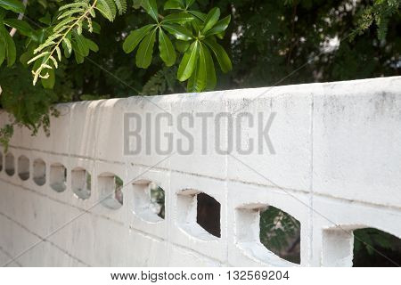 Trees overhanging a white concrete fence on a sunny day. Green foliage and white wall