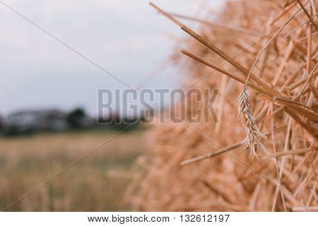 Hay bail harvesting in golden field landscape.